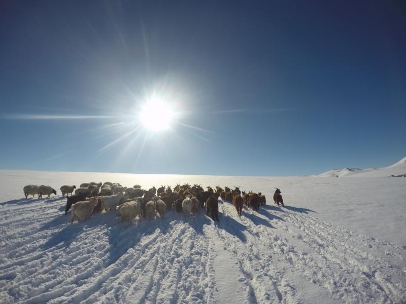 【モンゴル】カラコルムの雪山で絶景をみた